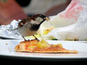 Pest Bird on Food