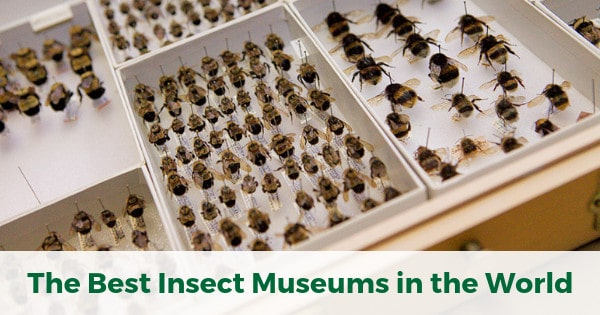 best insect museums