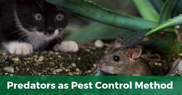 Predators as pest control method