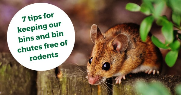 7 tips for keeping our bins and bin chutes free of rodents