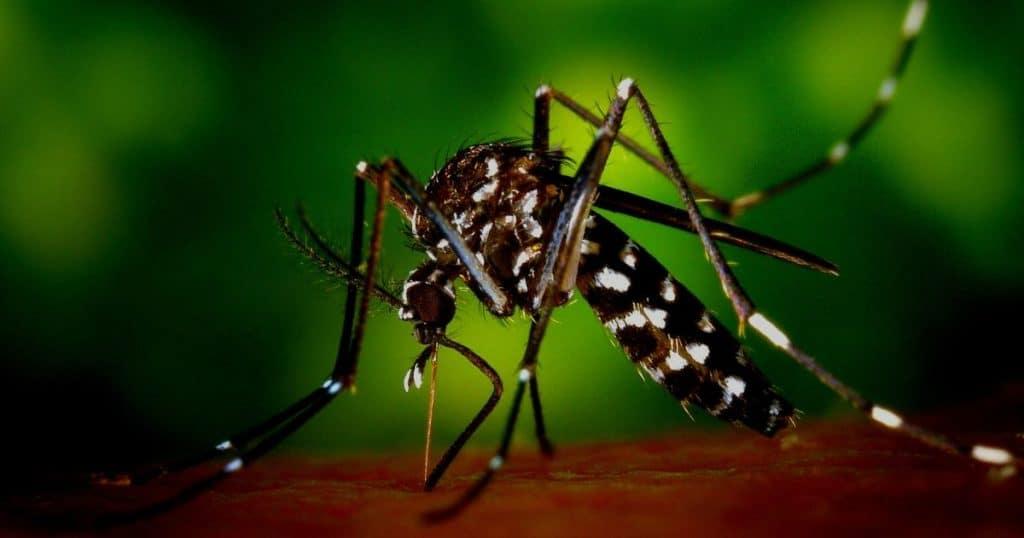 Dengue in Singapore