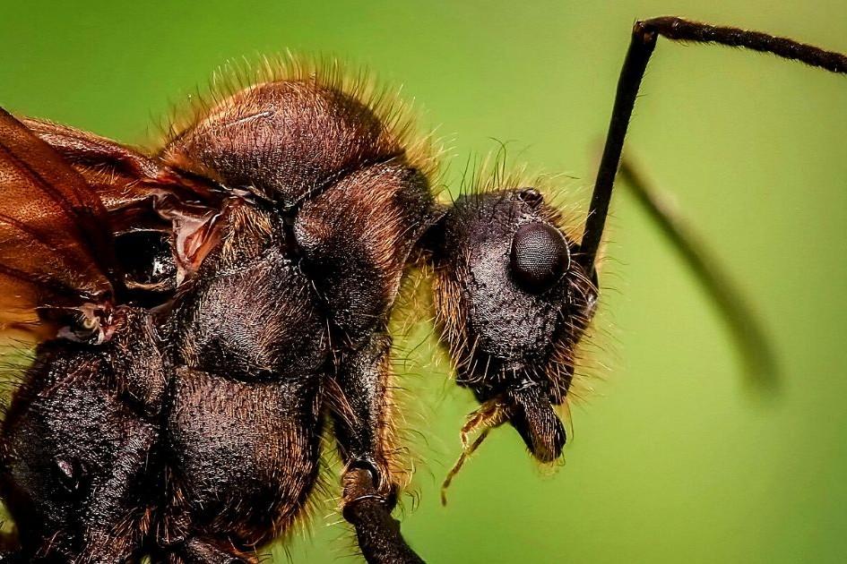 strangest pest control stories