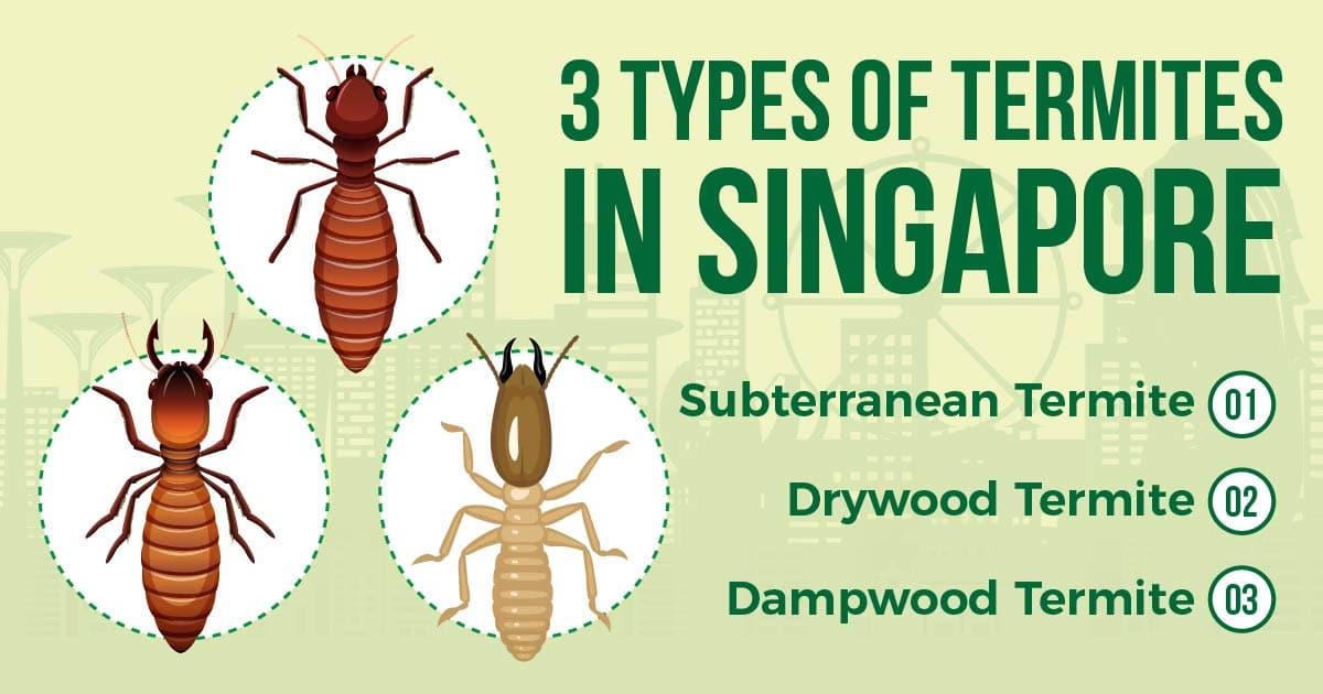 types of termites in singapore